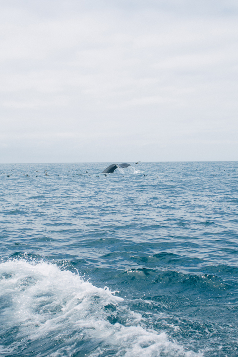 Whale-Watching-10