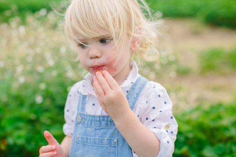 Sammy-Strawberry-Picking-Ipswich-MA-3