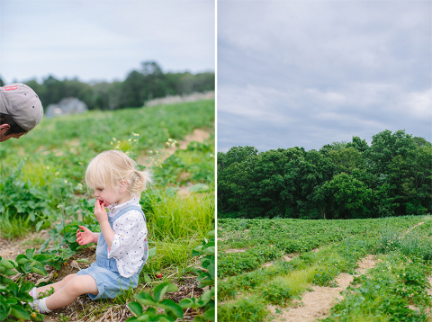 Sammy-Strawberry-Picking-Ipswich-MA-4