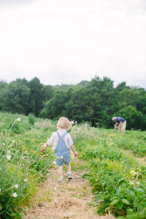Sammy-Strawberry-Picking-Ipswich-MA-6