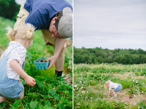 Sammy-Strawberry-Picking-Ipswich-MA-8